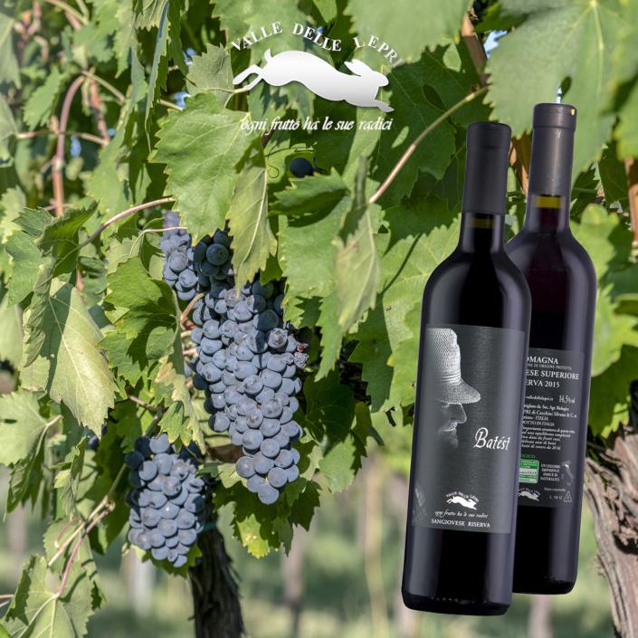Italian natural wine, Italian wine, fotografo specializzato ecommerce fotoritocco Rimini, fotoritoccatore fotomontaggio